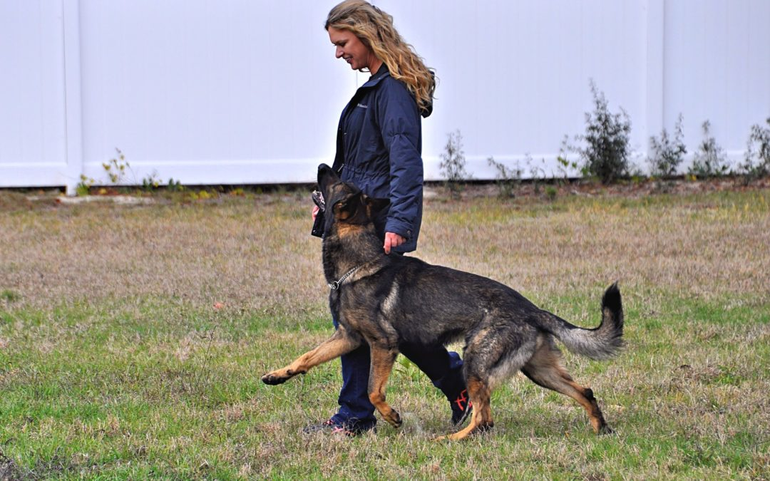 why you need a dog trainer top dog training in spring hill and