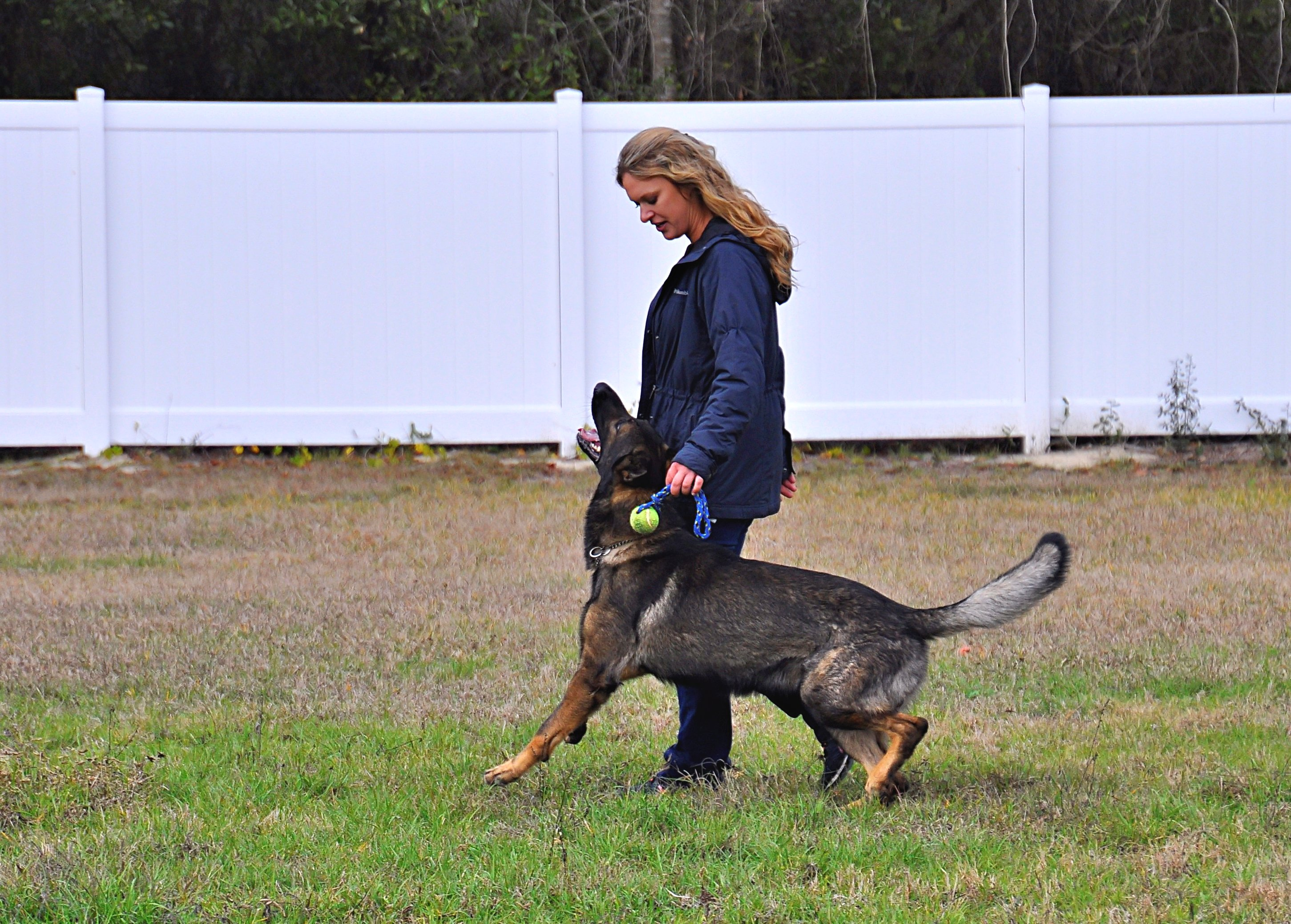 Training An Older Dog Obedience