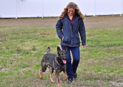Dog Trainer in Spring Hill (9)