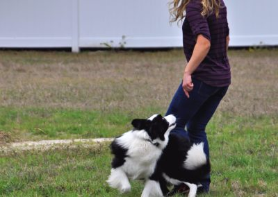 Dog Trainer in Tampa (10)