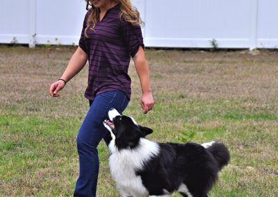 Dog Trainer in Tampa (11)
