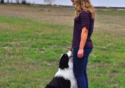 Dog Trainer in Tampa (6)
