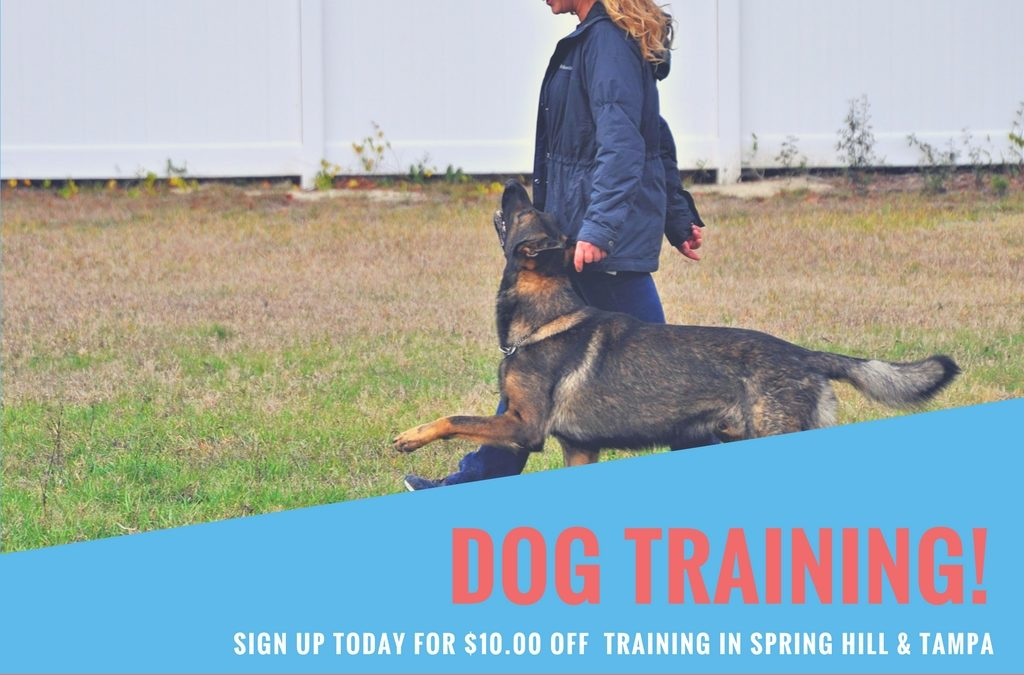 Dog Training Tips for Your New Puppy - Dog Boarding, Dog