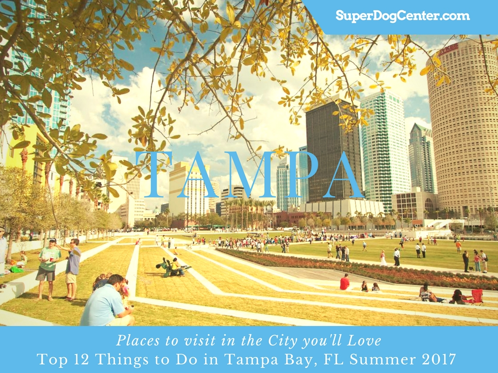 Dog Friendly Attractions Tampa Fl