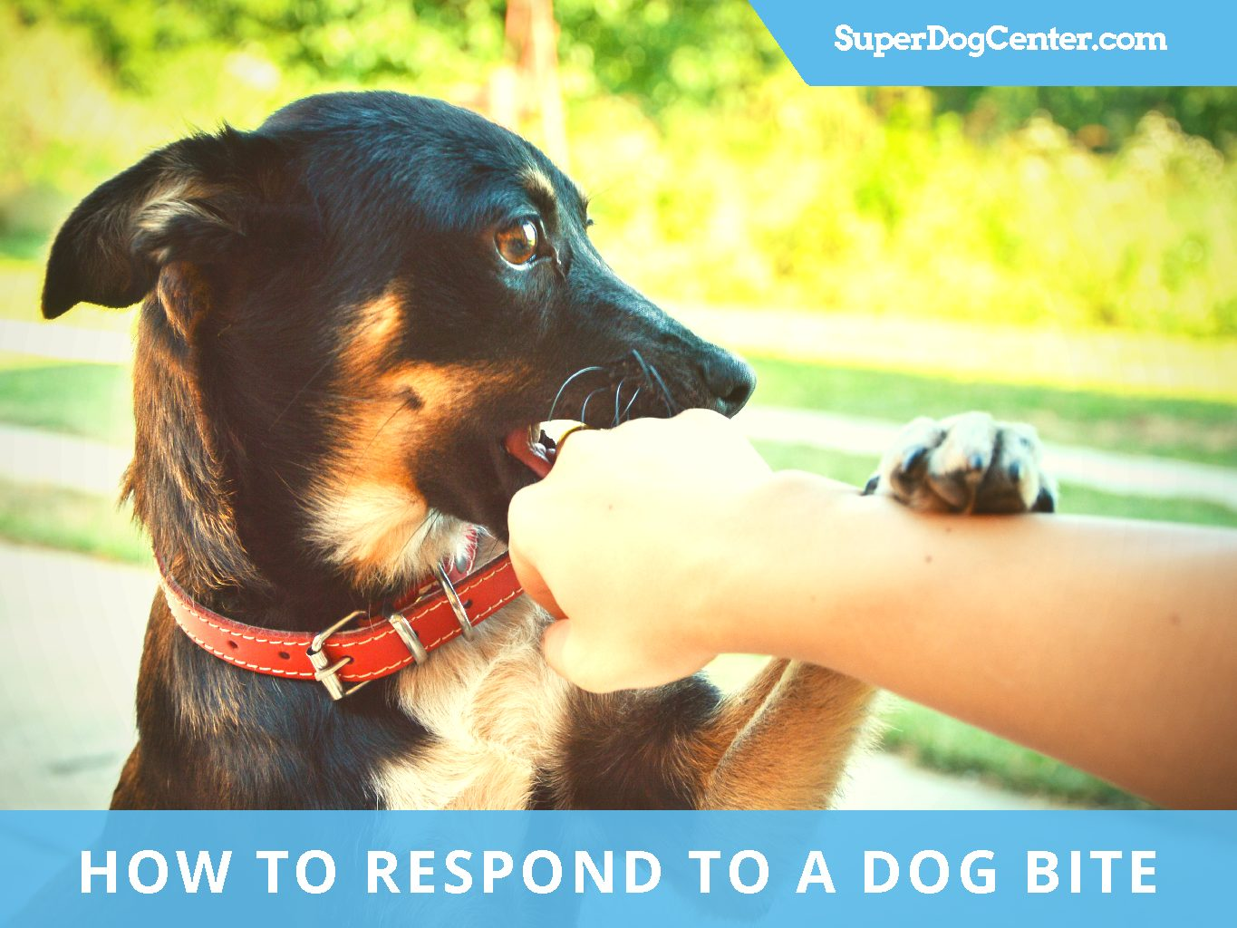 how to treat dog bite puncture wounds