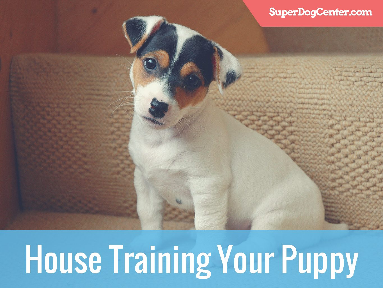Dog Potty Training Tampa