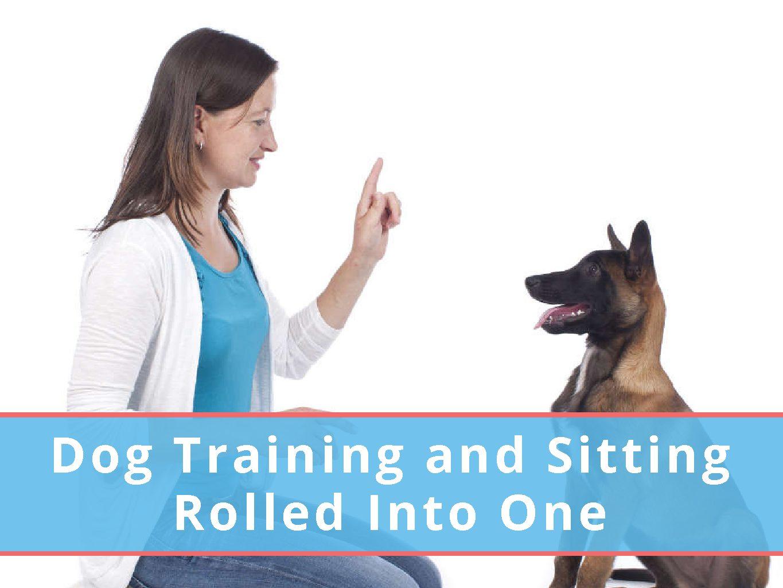 Blog - Dog Boarding, Dog Training and Dog Grooming