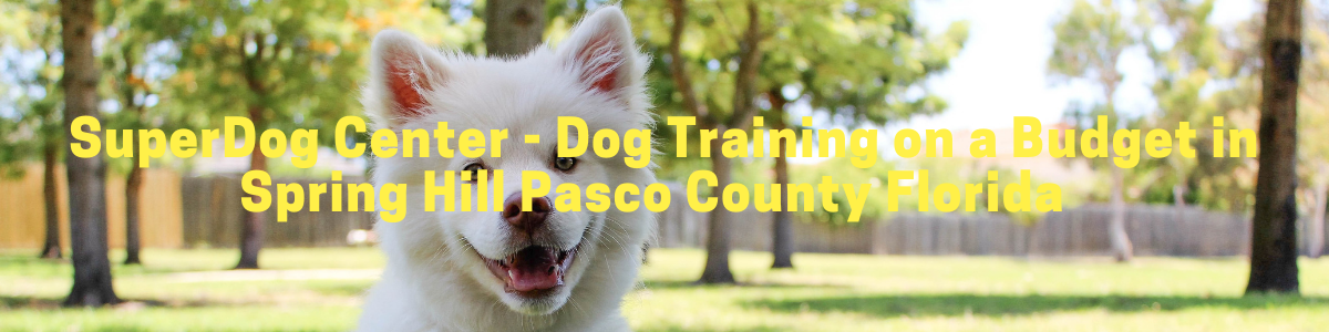 For affordable dog training in Spring Hill Pasco County Florida